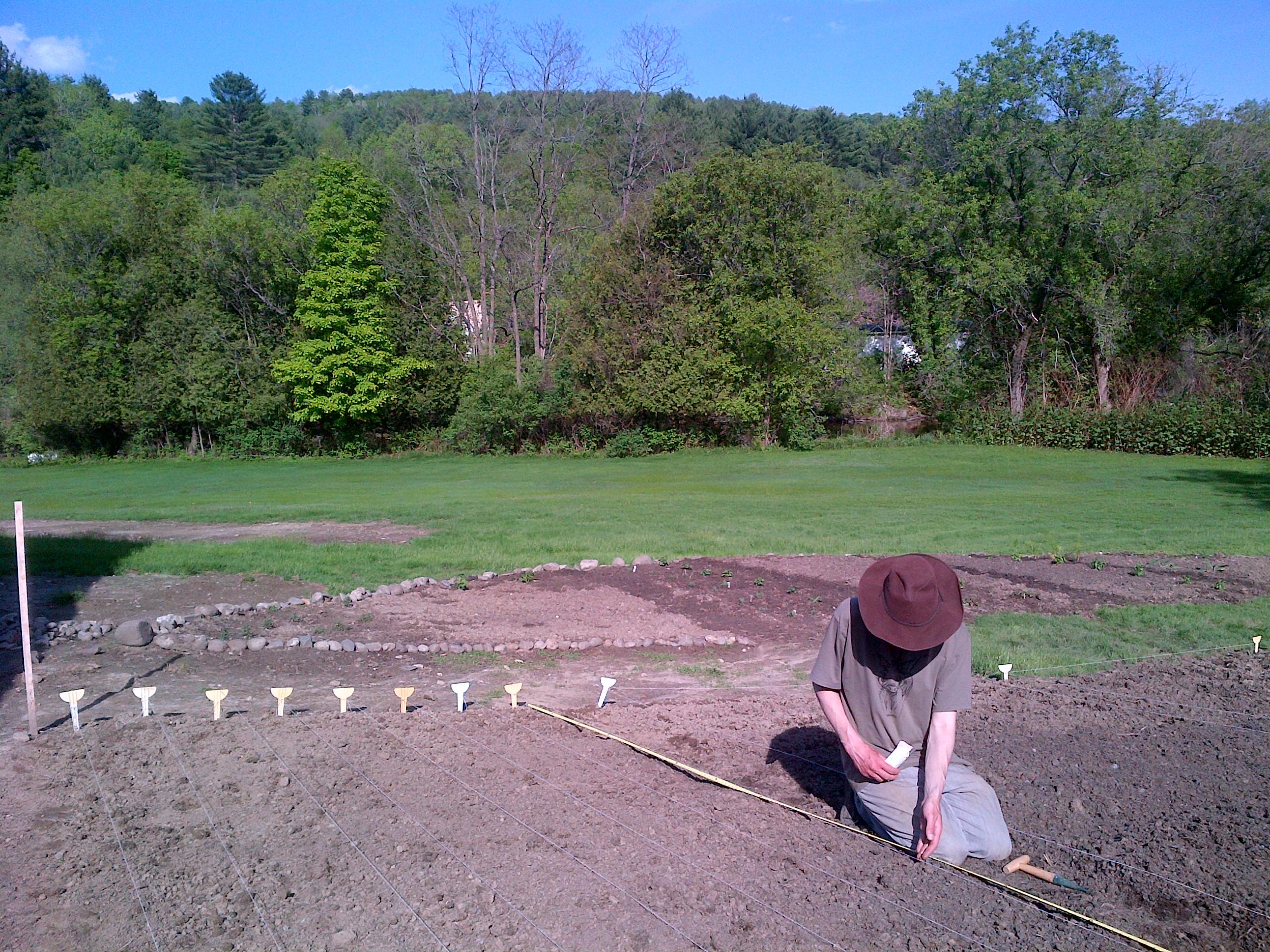 Jason plants sweet, early corn