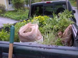 Truckload of perennial plants