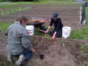 Cindy & Bernice plant beefsteak tomatoes