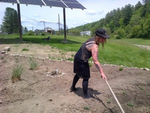 Lroy uses a hoe to cultivate between the herbs