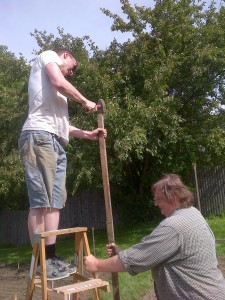 Pounding posts for the tall pea trellises