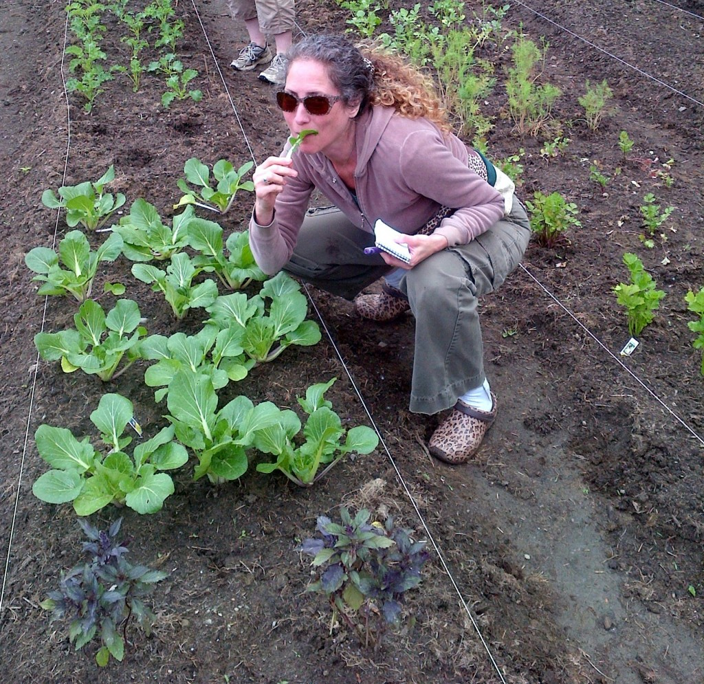 Eating bok choy off the plant in the garden