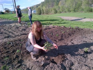 Lroy makes the first herb plantings at The Garden at 485 Elm (May 21, 2014)