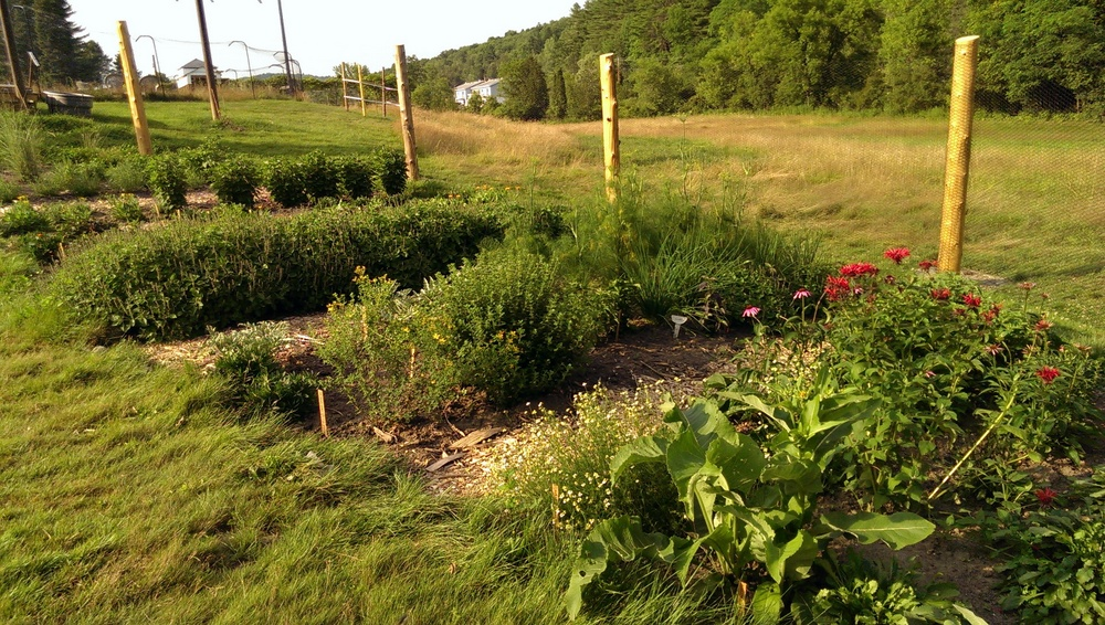 The medicinal herb garden at The Garden at 485 Elm (July 22, 2014)