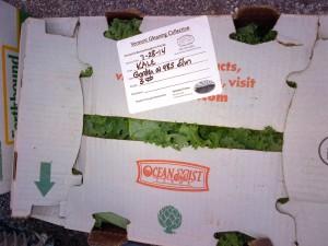 Eight lbs of kale