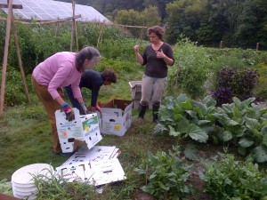 Two women assemble boxes in the garden while a third gives instruction