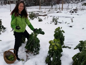 113014 SRA picks Brussels sprouts in snow3