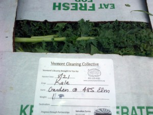 In 2014, Community Harvest of Central Vermont gleaned nearly 200 lbs of food from The Garden at 485 Elm.