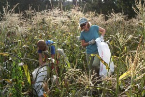 CHCV Lisa & Robin Glean Corn smaller