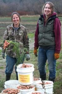 CHCV Sue & Diana Carrot Gleaning crop
