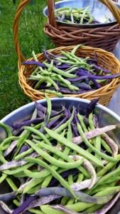 082015 Beans