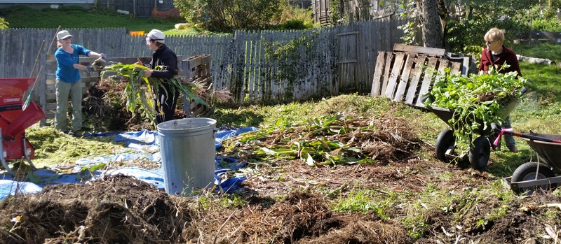 Ella and Hannah feed corn stalks into the chipper so they can be added to the compost pile. Norma arrives with more stalks.