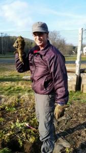 120915 Chris picks giant parsnip7