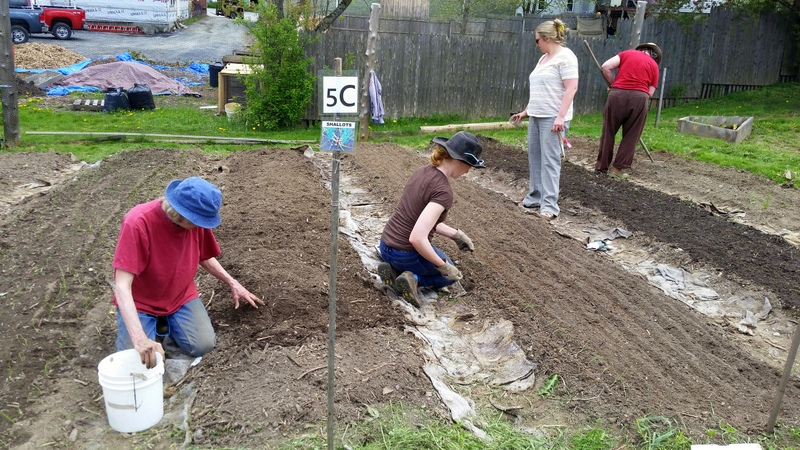 2016-05-21 Bernice, Hannah, Andrea, & Tory prep, plant, fertilize for onions.42