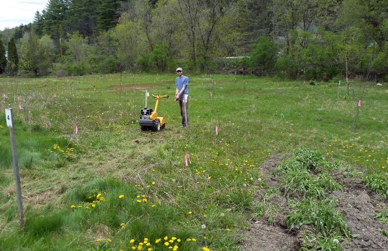 2016-05-21 John tills field herb beds.38
