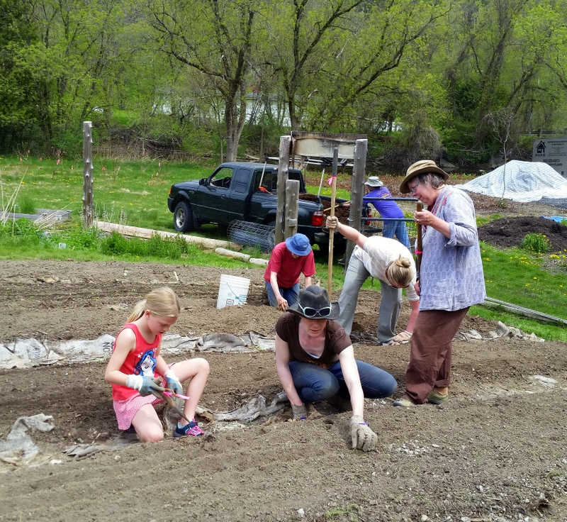 2016-05-21 Prepping allium beds.10