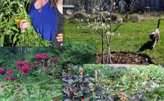 2016 Pollinator collage