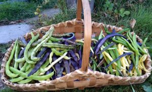 2016-10-15-basket-of-beans-26