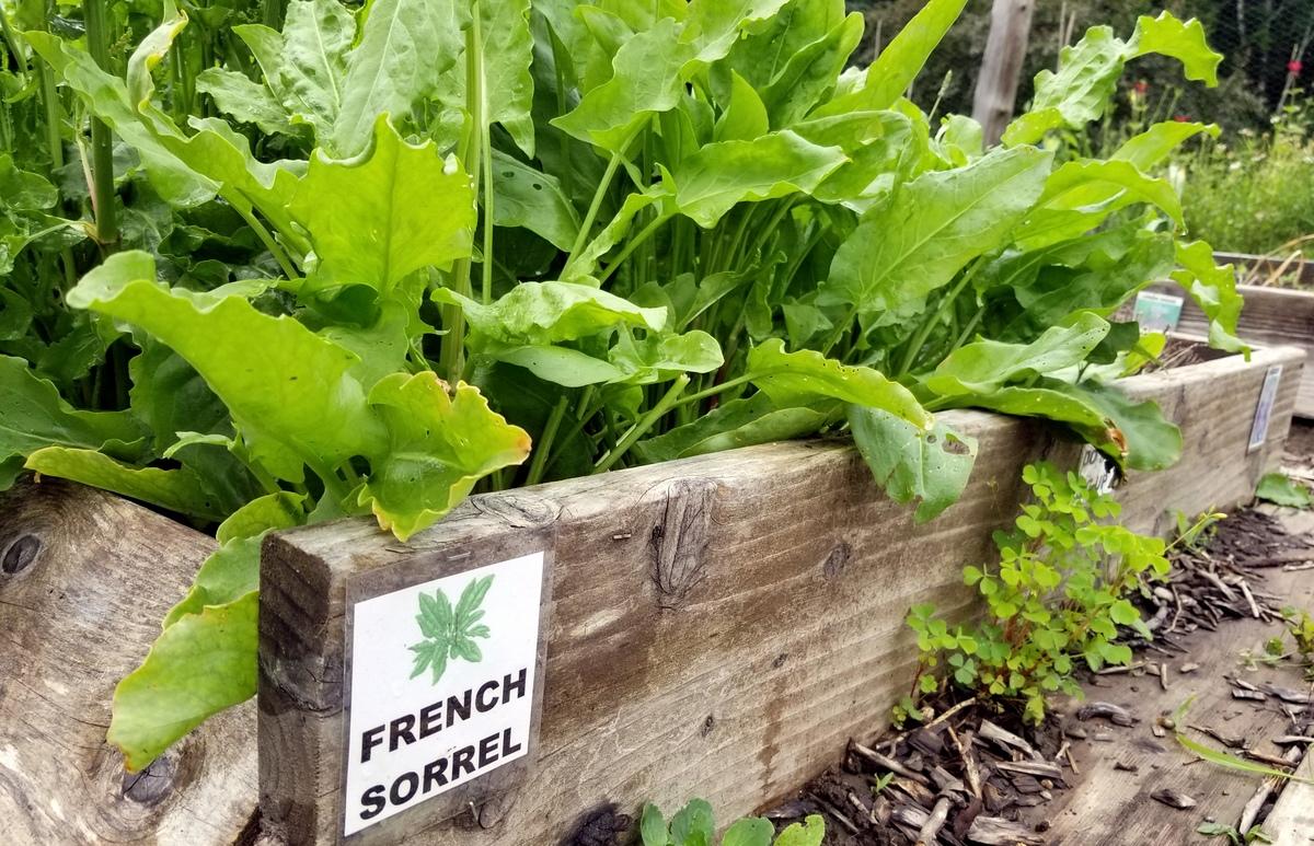 Bed Of Crisp Garden Greens Food