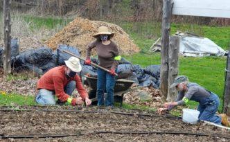 Gardeners planting onions