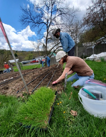Gardeners in the dirt with onion seedlings in foreground