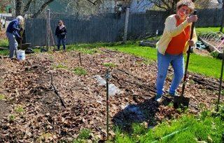 Gardeners edge grass away from an unplanted garden bed